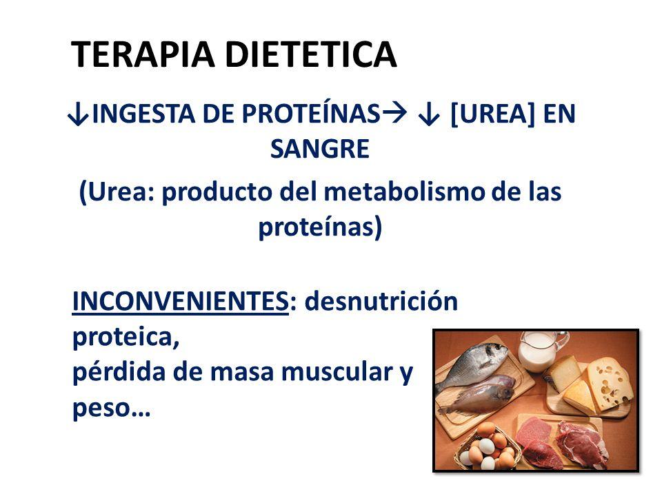 TERAPIA DIETETICA ↓INGESTA DE PROTEÍNAS ↓ [UREA] EN SANGRE